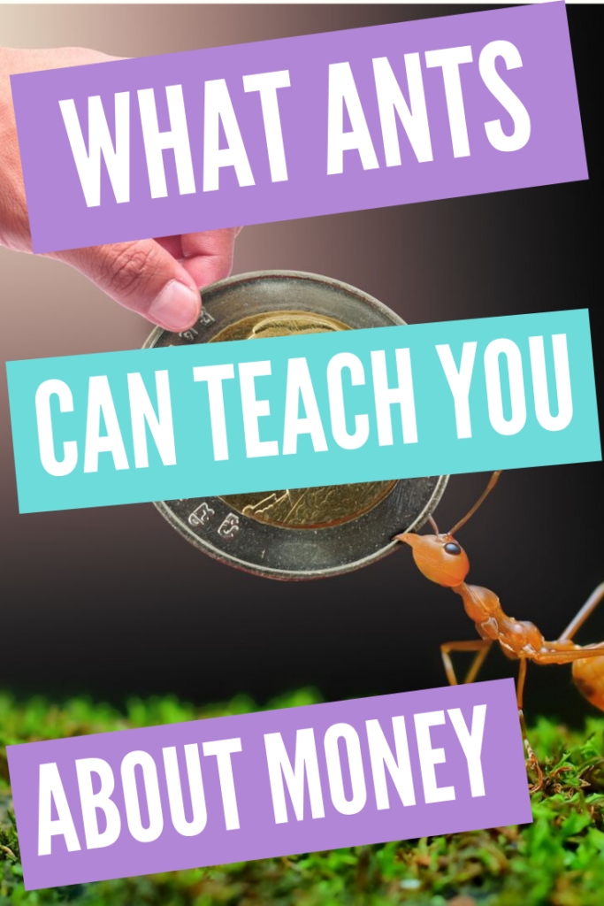 What Ants Can Teach You About Money
